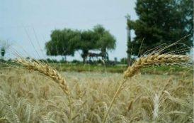 افتتاح 475 میلیارد ریال طرح کشاورزی در آذربایجان شرقی