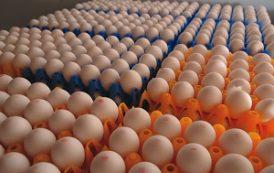 تخم مرغ ارزان شد/ قیمت هر کیلو تخم مرغ درب مرغداری 7400 تومان