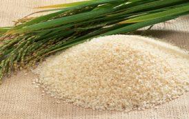 قیمت خرید برنج اعلام شد